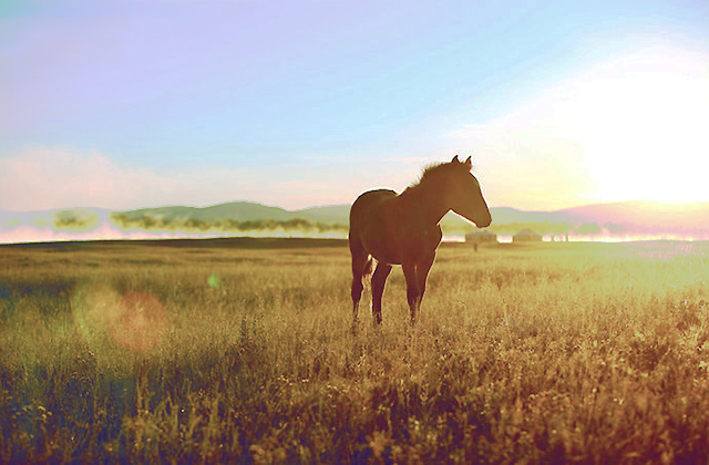 #房车精品游# 追寻最美草原——乌兰布统之旅